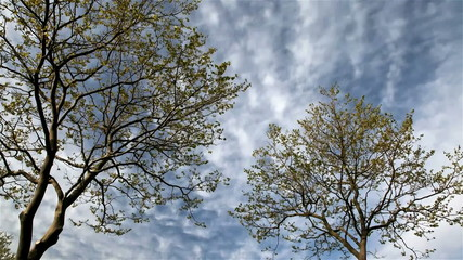 Blue sky with clouds and tree timelapse