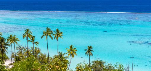 Palmiers sur le lagon de Moorea