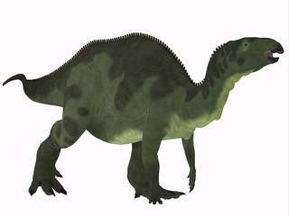 Camptosaurus over White