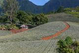 Fototapety Route des ananas à Moorea