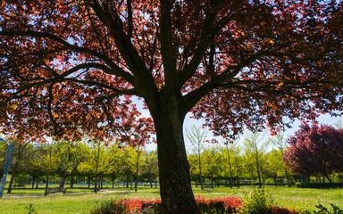 Arboles de Parque en Primavera