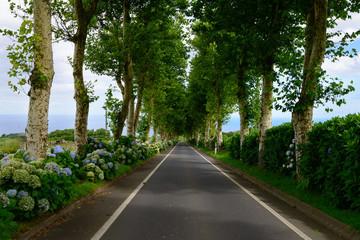 Estrada regional dos Açores