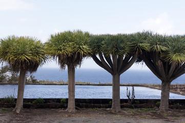 Wasserspeicher in Punta del Hidalgo