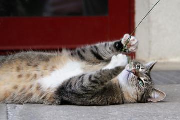 Katze spielend