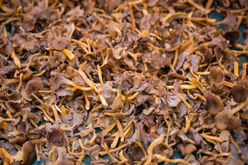 Fresh mushrooms on the market