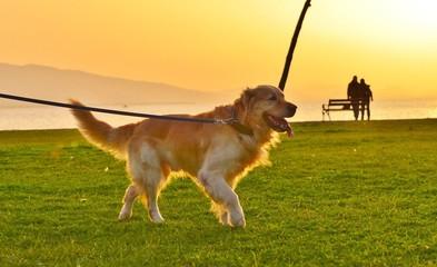 Dog on Beach, Sunset, Dog Sunlight