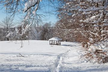 forest glade in winter in Little Carpathian hills - Slovakia