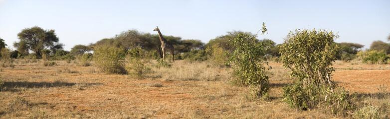 Kenyan savannah