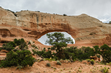 Wilson Arch with Tree