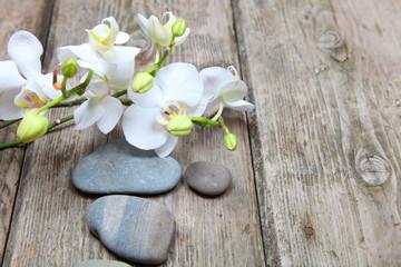 Zen stones and orchid