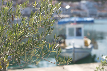Olive branches and boats