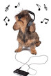 Pet music therapy