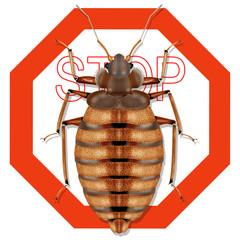 bedbug, cimex lectularius