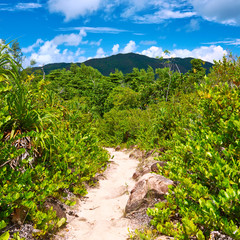 Foothpath in tropical nature
