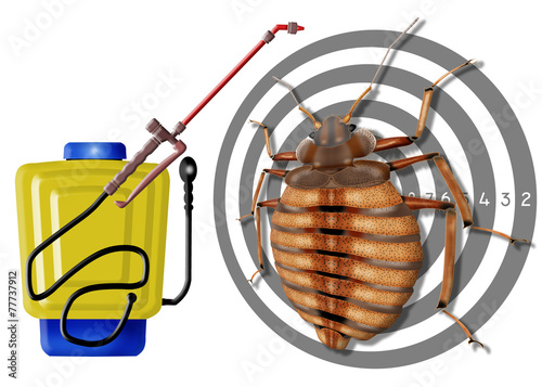 bedbug, cimex lectularius, spray - 77737912