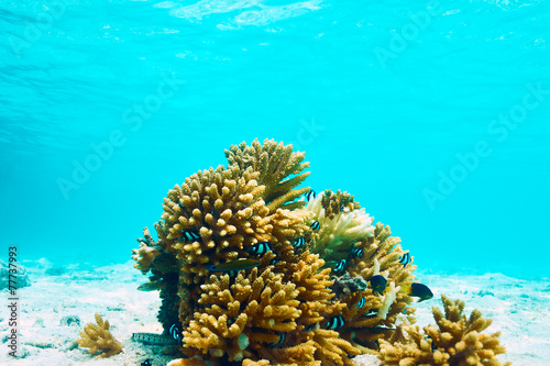 Coral reef at Maldives
