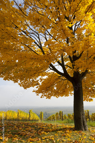 canvas print picture Herbst