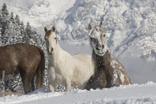 Araber im Schnee © skmjdigital