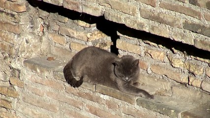 Homeless cats of the shelter Largo di Torre Argentina. Rome