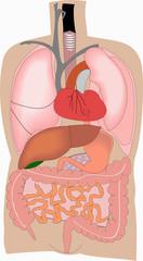 Human organ #21