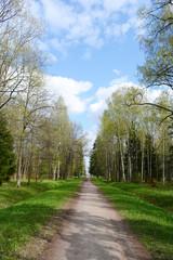 Alley in Alexandrovsky Park in Tsarskoe Selo.