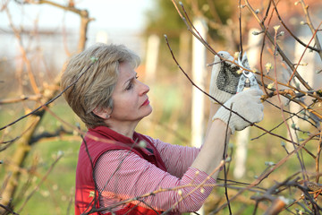Agriculture, adult woman pruning tree in orchard