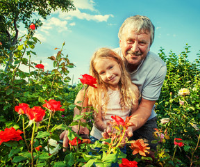Man witn child caring for roses in the garden