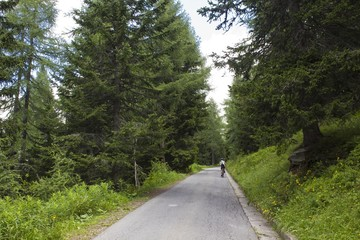 cyclist in a mountain road through trees