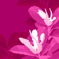 Red magnolia flowers
