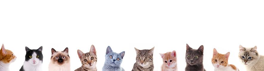 Verschiedene Katzenköpfe in der Reihe