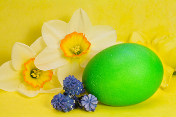 green Easter egg and narcissus