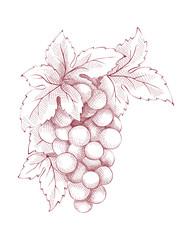 Floral vector decoration - grapes