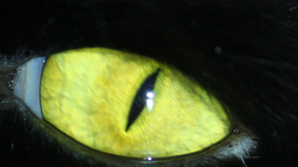 Black Cat's Eye