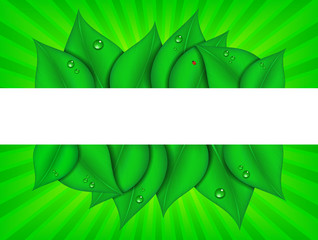Green Graphic Background