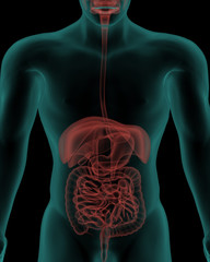 Human body with digestive system internal organs