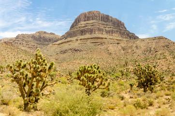 Spirit Mountain and Joshua Trees, Grand Canyon, Arizona