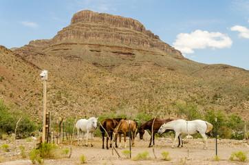 Horses at Spirit Mountain, Grand Canyon, Arizona