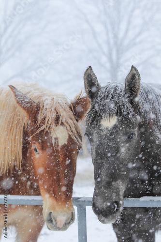 2頭の馬 © makieni