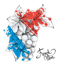Bunch of grapes - the symbol of France. Vector illustration.