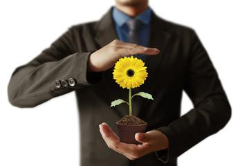 sunflower in hands