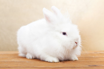 Cute white rabbit on wooden surface