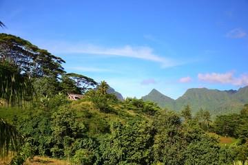 LUXURIANCE DE LA VEGETATION TAHITIENNE