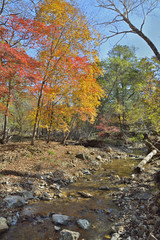 Autumn woodsy river 16