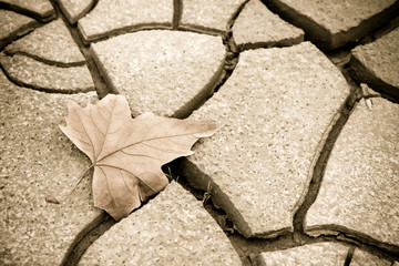 Isolated dry leaf on dry ground - toned image