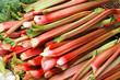 Rhubarb - 77797157