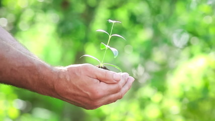 Senior man and baby holding young plant in hands. Ecology concep