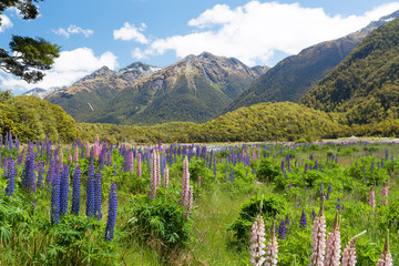 Beautiful landscape with mountains and wild flowers in Fiordland