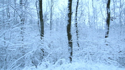 Tracking Stabilized shot through snowy forest trees in winter