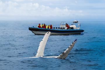 Wale Watching - Walbeobachtung - Buckelwal