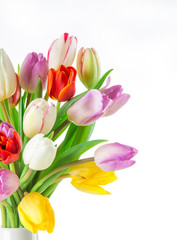 tulips over white background